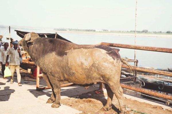 India-Varanasi-rasarit-86_1024x683-600x400