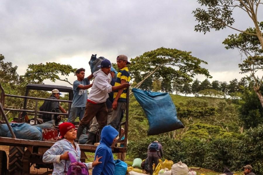 plantatie-de-cafea-BeanZ-Nicaragua-1-of-376-120_1575x1050_1280x853
