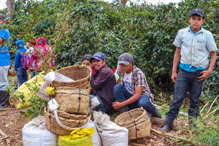 plantatie-de-cafea-BeanZ-Nicaragua-1-of-376-124_1575x1050_1280x853
