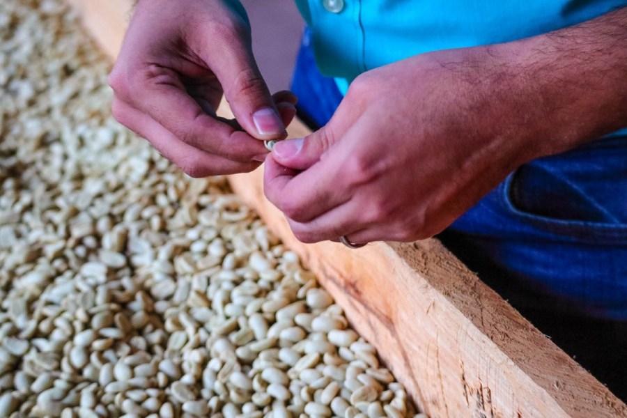 plantatie-de-cafea-BeanZ-Nicaragua-1-of-376-180_1575x1050