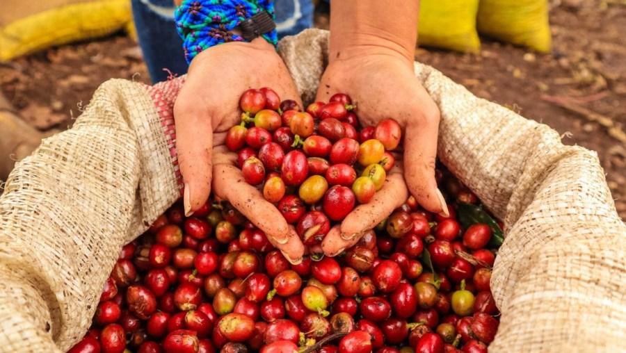 plantatie-de-cafea-BeanZ-Nicaragua-1-of-376-353_1680x948