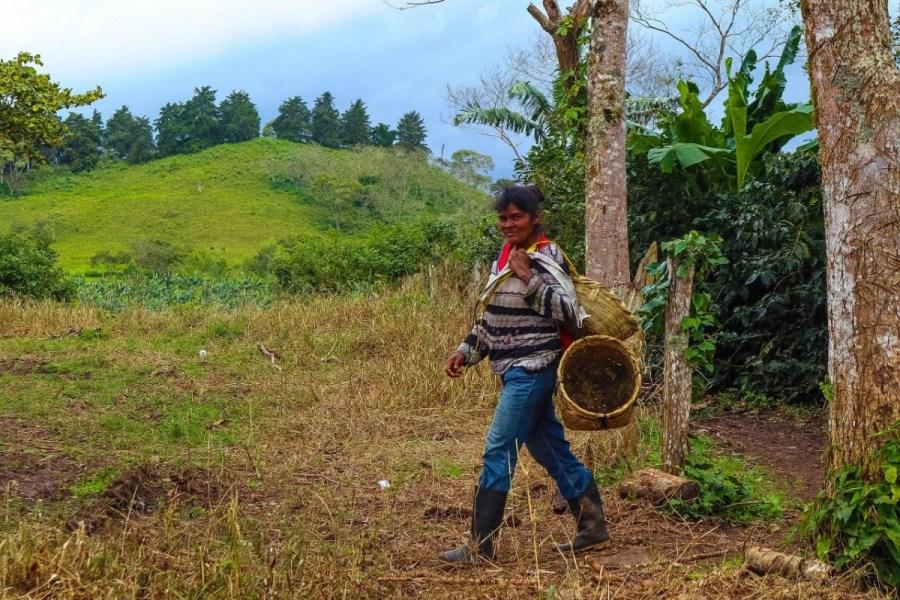 plantatie-de-cafea-BeanZ-Nicaragua-1-of-376-370_1575x1050_1280x853