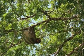 Vlog de călătorie Rio San Juan – leneși în sălbăticie