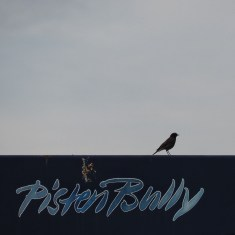Ez a madár.