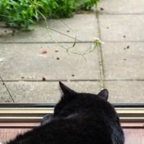 Ez itt a kert - mondtaja macska.