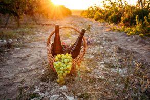 Povestea vinului de #Jurilovca 4