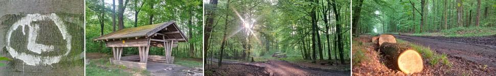 banner-rundwanderweg-im-wald-bei-lemgo-entrup