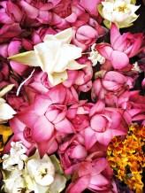 Lotus offerings at the Gal Vihara