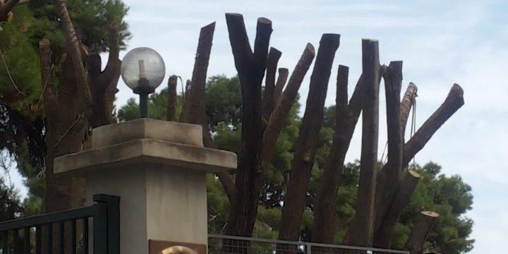 Verde urbano,alberi da proteggere