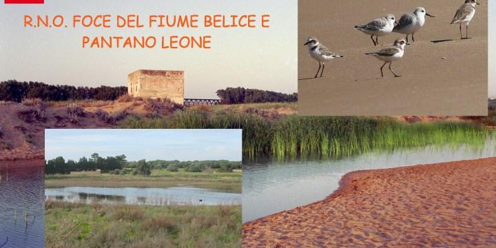 DOMENICA 17 FEBBRAIO ESCURSIONE BIRDWATCHING LIPU PALERMO-LIPU ALCAMO  R.N.O. FOCE DEL FIUME BELICE E DUNE LIMITROFE E PANTANO LEONE