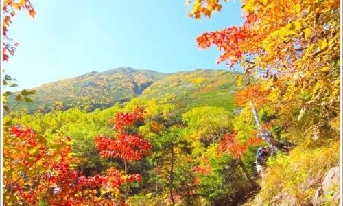 紅葉、秋、山