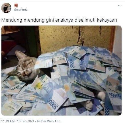 Kucing sultan (Twitter/@sofinrfz)