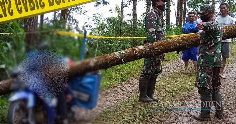 Hujan Deras, Penjual Cilok Tewas Tertimpa Pohon Pinus   Radar Madiun