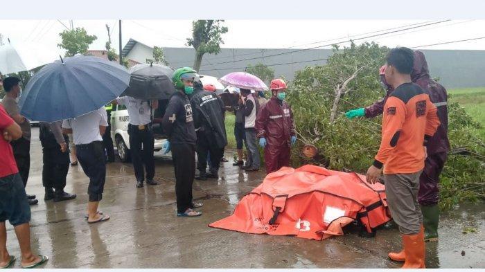 Hujan Deras Disertai Angin Kencang, Pria Asal Sragen Ini Tertimpa Pohon Meninggal di Tempat - Tribun Jateng