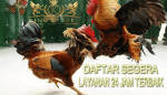 CHICKEN REPORT - agen aduayam king88bet online