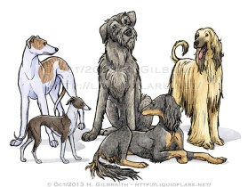 Graceful Sighthounds