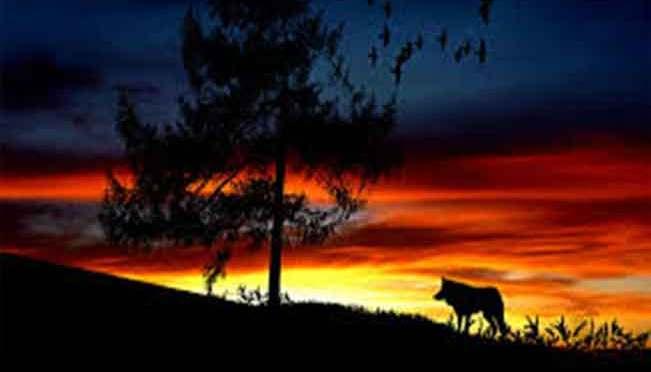 Kisah Hikmah: Anjing Dan Serigala
