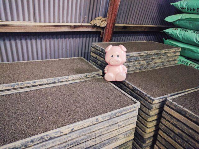 籾を蒔いた育苗箱