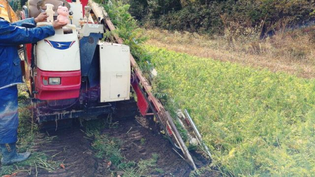 にんじん収穫機に乗せてもらうピグユキ&ピグパパ