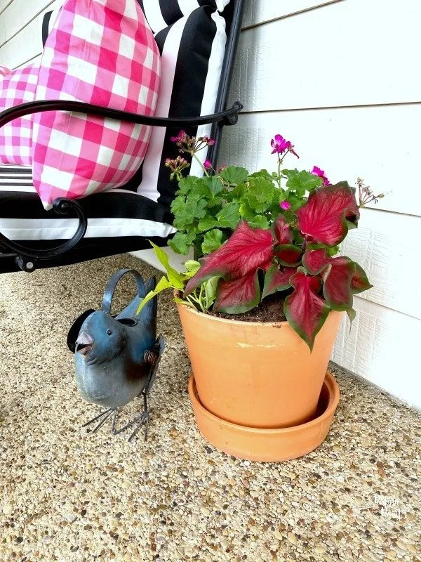 plants, flower pot, watering can, bench