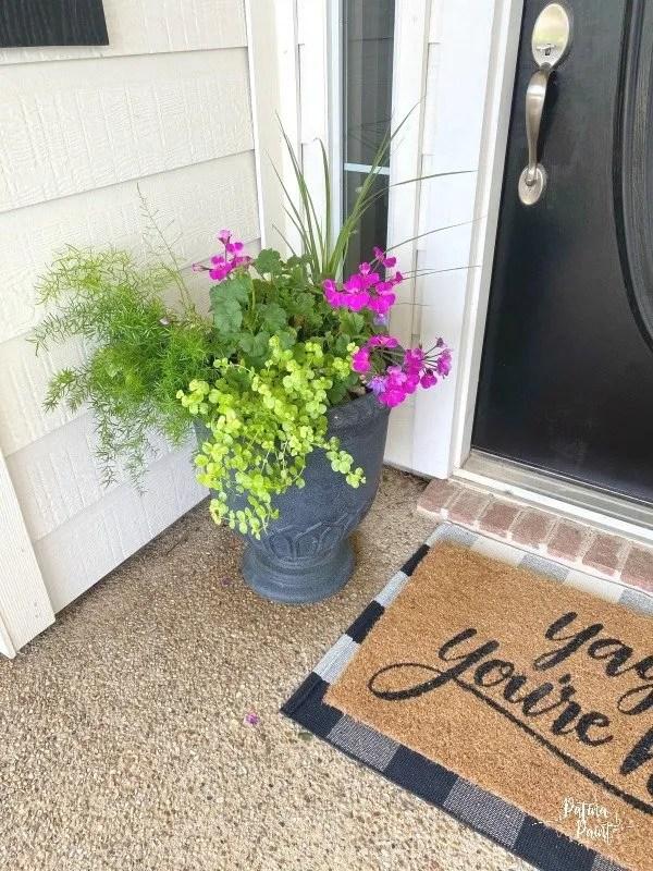 plants, pot, entry