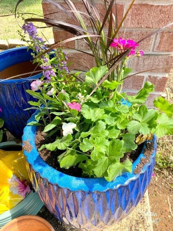 plants in blue pot