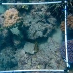 coral sample