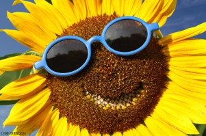 Happiness smile with sunflower.