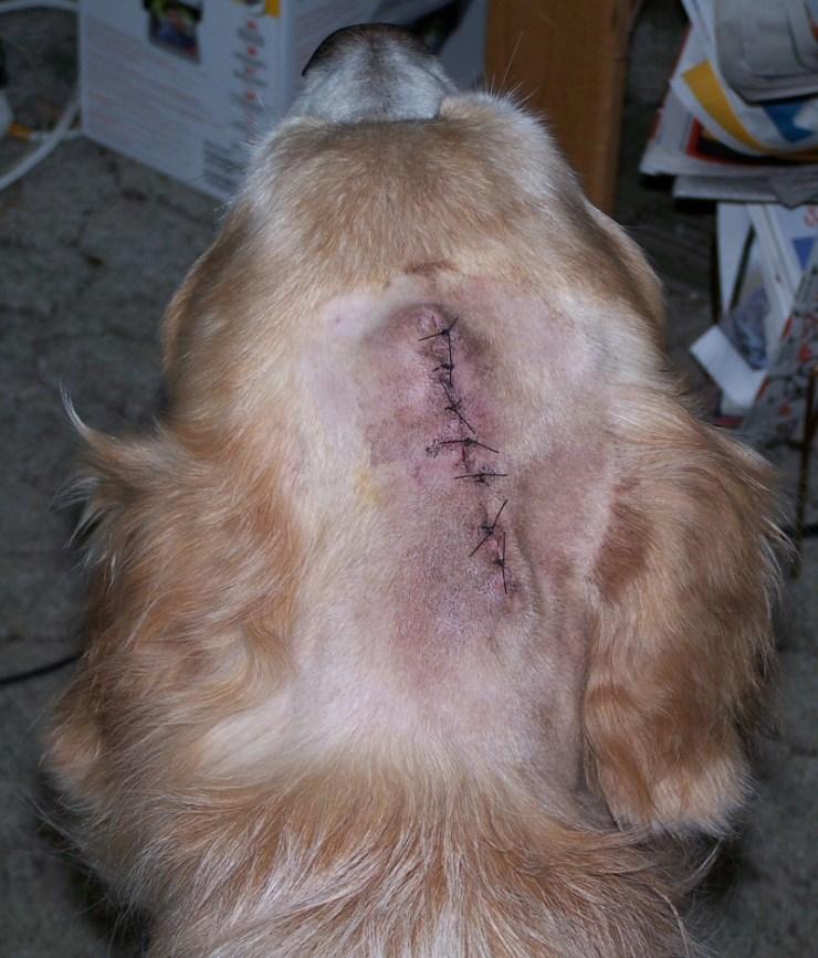 stitches1