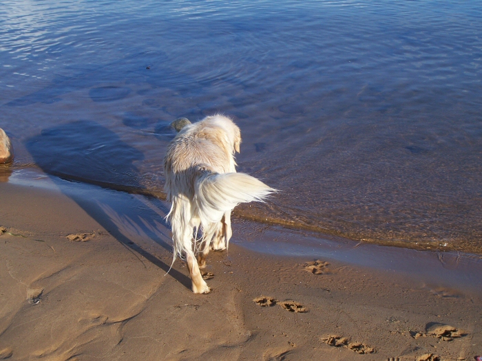 Surf's First Solo Swim