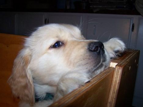 puppymonty
