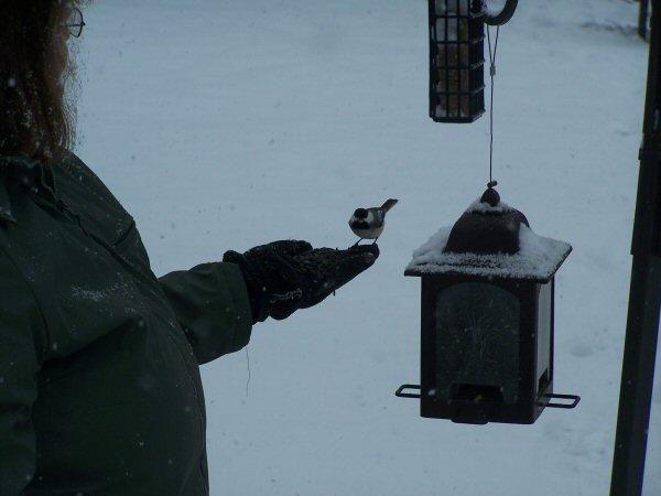 feedingthebirds2