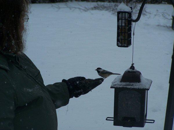 feedingthebirds3