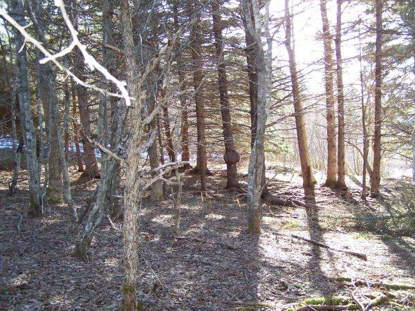 woodsinjanuary9