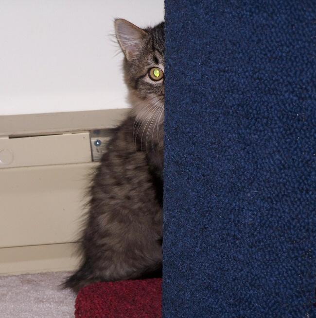 Photos of the 2 kitties