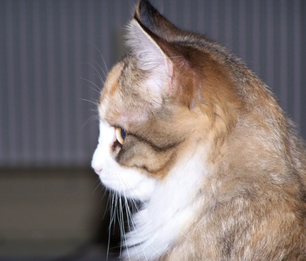 kittensnov5