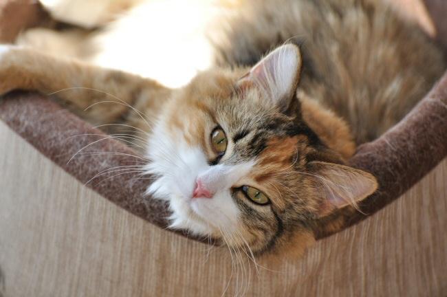 Sally kitten