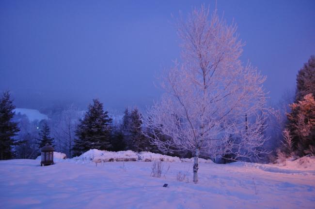Jack Frost's visit