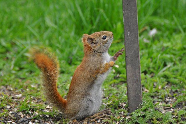 flicker,squirrel,& chipmunk