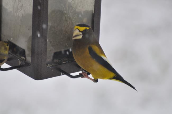 December 23 snow and birds
