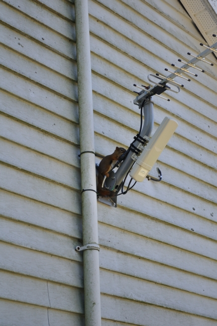 squirrel on the antenna