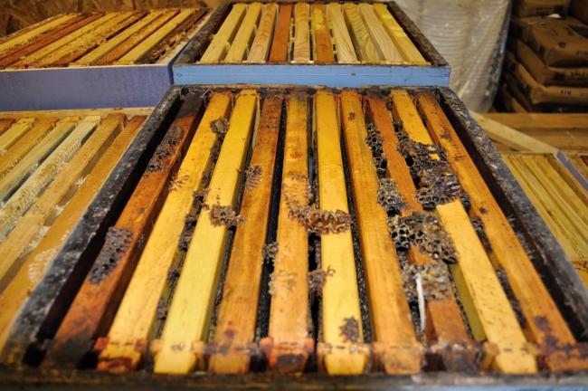 honey farm