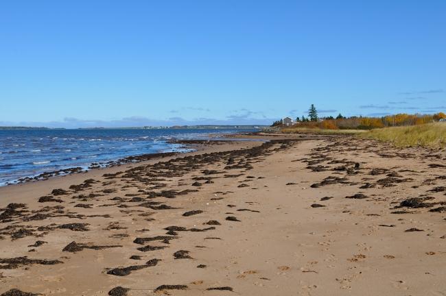 Northumberland shore drive