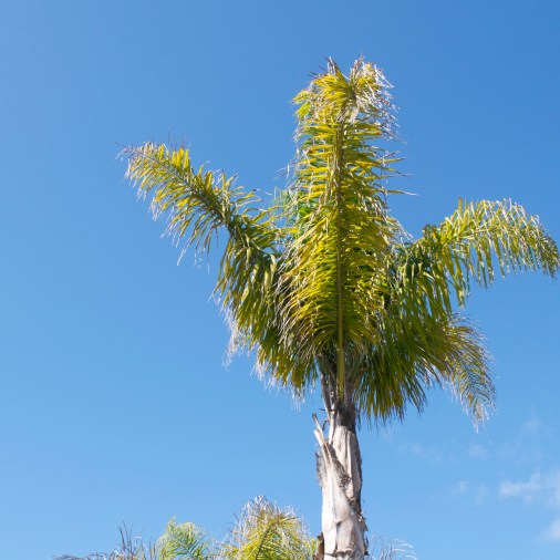 Palm trees are really cool. We had gorgeous weather. Down to 11-13C at night, but mid 20's and sunny during the day