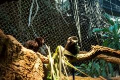 Little itty bitty monkeys