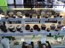Cupcake store - wow!