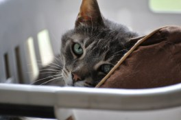 Zeus in the laundry
