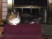 Rare photo of Sally and Zeus