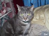 Zeus in 2005