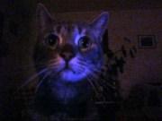 Zeus in the dark